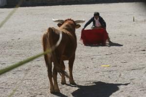 Casabindo bull fight