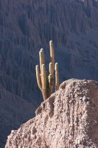 single cactus along the way