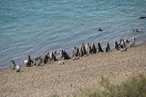 penguins at the lagoon