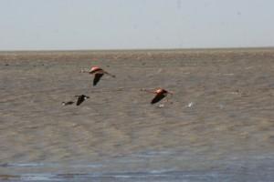 Flamingos over Laguna de los Pozuelos