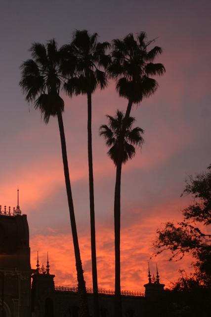 Palmen op het plein van Salta