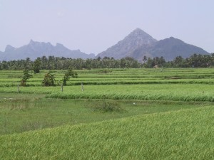 rice paddies, palm trees and granite hills of the Western Ghats