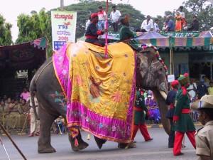 caparisoned elephant in the parade (2)