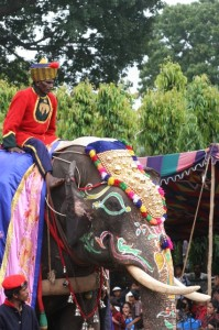 caparisoned elephant in the parade