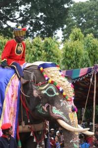 caparisoned elephant in the parade