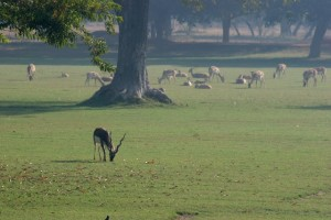 the tomb is situated in a lovely park, full of grazing deer, and with far fewer tourists that at the Taj