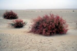 unexpected colour in desert