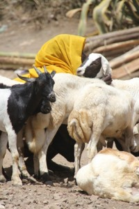 woman with her goats