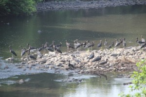 birds in the Mago River