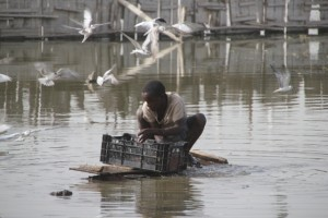 fisherman clearing the catch of the day, ahead of the birds