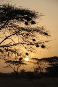 sunrise in the Awash National Park