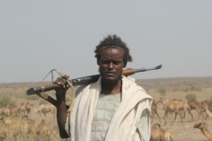 Afar man guarding camels