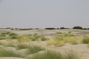 dunes between Dodom and Hamed Ale