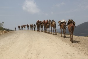 camel caravan climbing down the escarpment