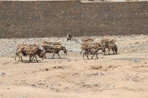 donkeys carrying fire wood, in the wadi cutting through Dire Dawa