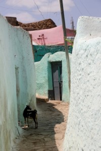 narrow street in old Harar