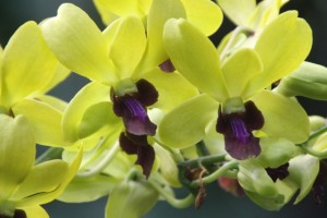 I could posts 100's of flower photos; this is one of the brilliantly flowering orchids