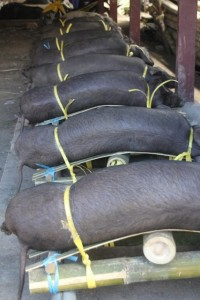 sold pigs, prepared for transport