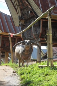 huge bull, imagine these horns on your house!