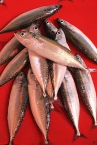 Manado fish market