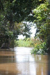 narrow channel back towards the Mahakam River