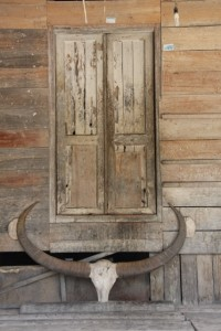 door decorated with a buffalo skull and horns