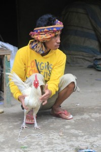 a man and his fighting cock