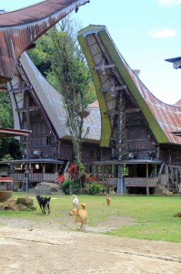 the village of Lokomata, neat and clean