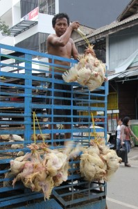 chicken seller, straight from the truck