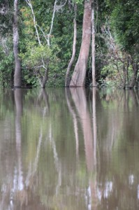 trees along the Ohong River, roots under water