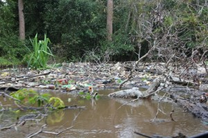 rubbish collecting in a bend of the river