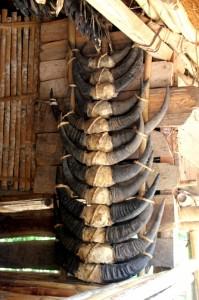 buffalo horns in Kampung Tarona