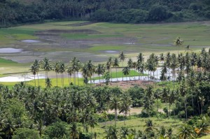 the view of rice paddies and palm trees
