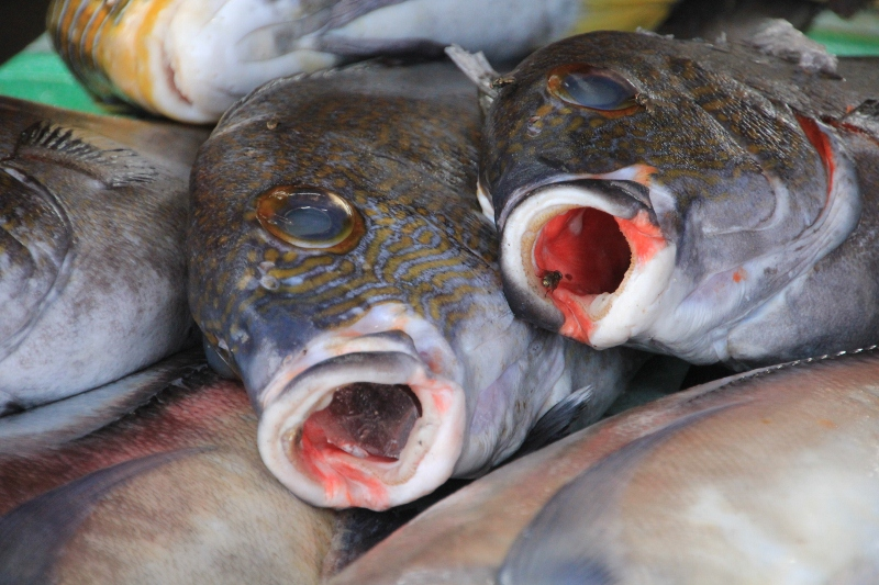 more fish for sale, the fly is not sure what to do next
