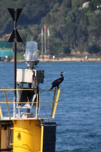 there is even some bird life, on the Bosphorus