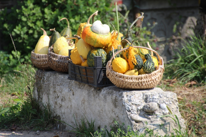 pumpkins for sale along the road