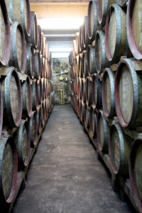 wooden barrels lined up in the cellar of Rotenberg's estate