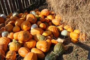 pumpkins in the yard of a Moldavia village house