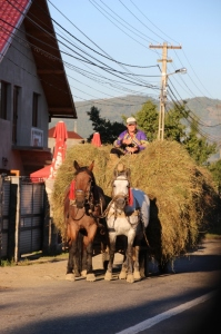 a Dutch-speaking Romanian on top of his hay cart