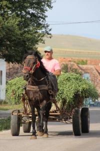 a common form of rural transport, still