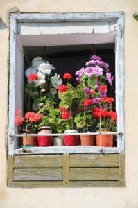 flower-filled window, Sighisoara