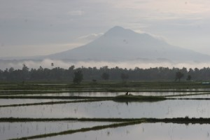 one of the volcanos near Banda Aceh as backdrop for the paddies