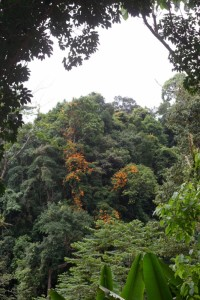 view of the jungle, home to the Orang Utans