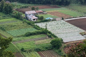 the land between Medan and Berestagi is very fertile, thanks to the volcanic soil