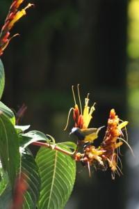 bird near Ambarita village