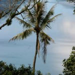 palm tree in front of Danau Maninjau
