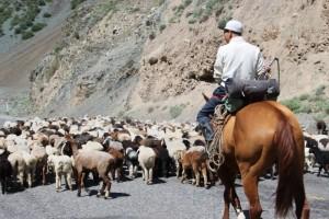 herdsman on horseback