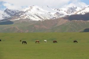 horses grazing their summer diet