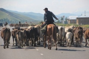 herds along the road, on their way to summer pastures