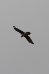 a bird of prey circling the border post
